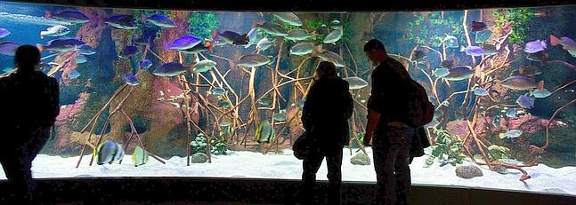 aquarium-donostia